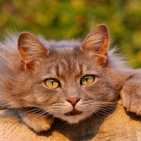 Why A Cat Vet?