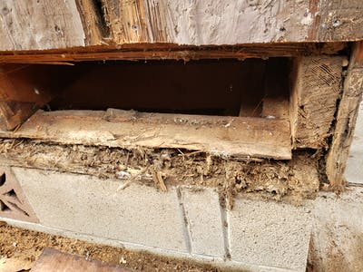 Termite / Dryrot Damage