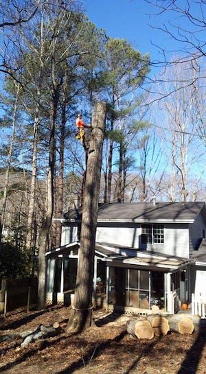 Tree Climber Removal