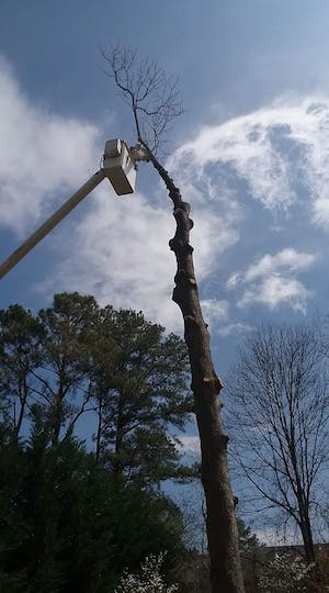 Bucket Truck Tree Removal
