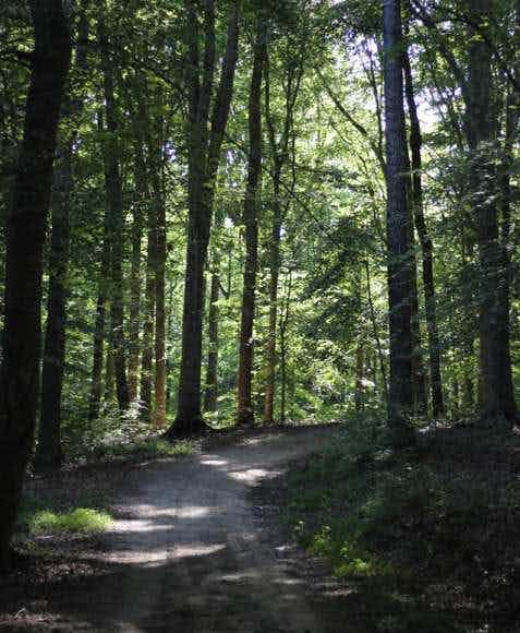 The Wooded Trails