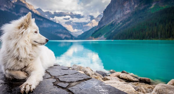Happy dog at Lake Louise Alberta. Want Psychic Jarka to talk to your favourite pet or animal and find out what it wants to say to you?