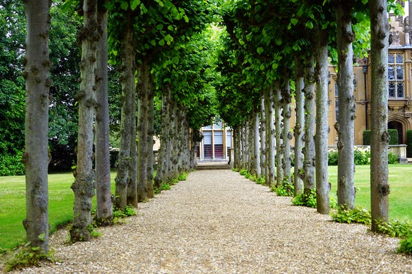 A tree lined walkway to a beautiful mansion. Is it haunted? If you have unwanted visitors in your house, call Psychic Jarka