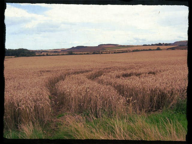File:Wheat fields at Athelstaneford Mains - geograph.org.uk - 959623.jpg