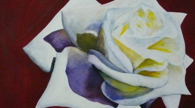 Peace Rose Delight