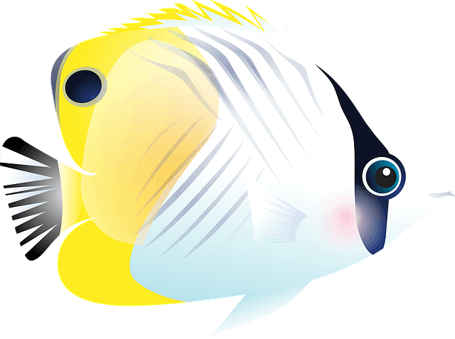 Aquarium Store
