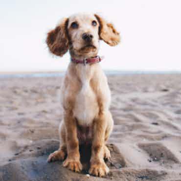 Adopt me please