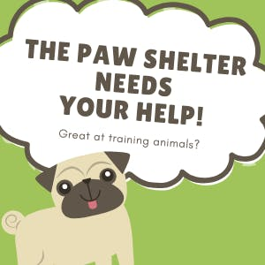 The Paw Shelter needs help