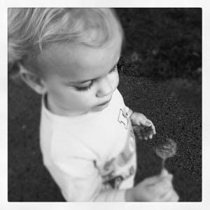 Elisha And The Dandelion