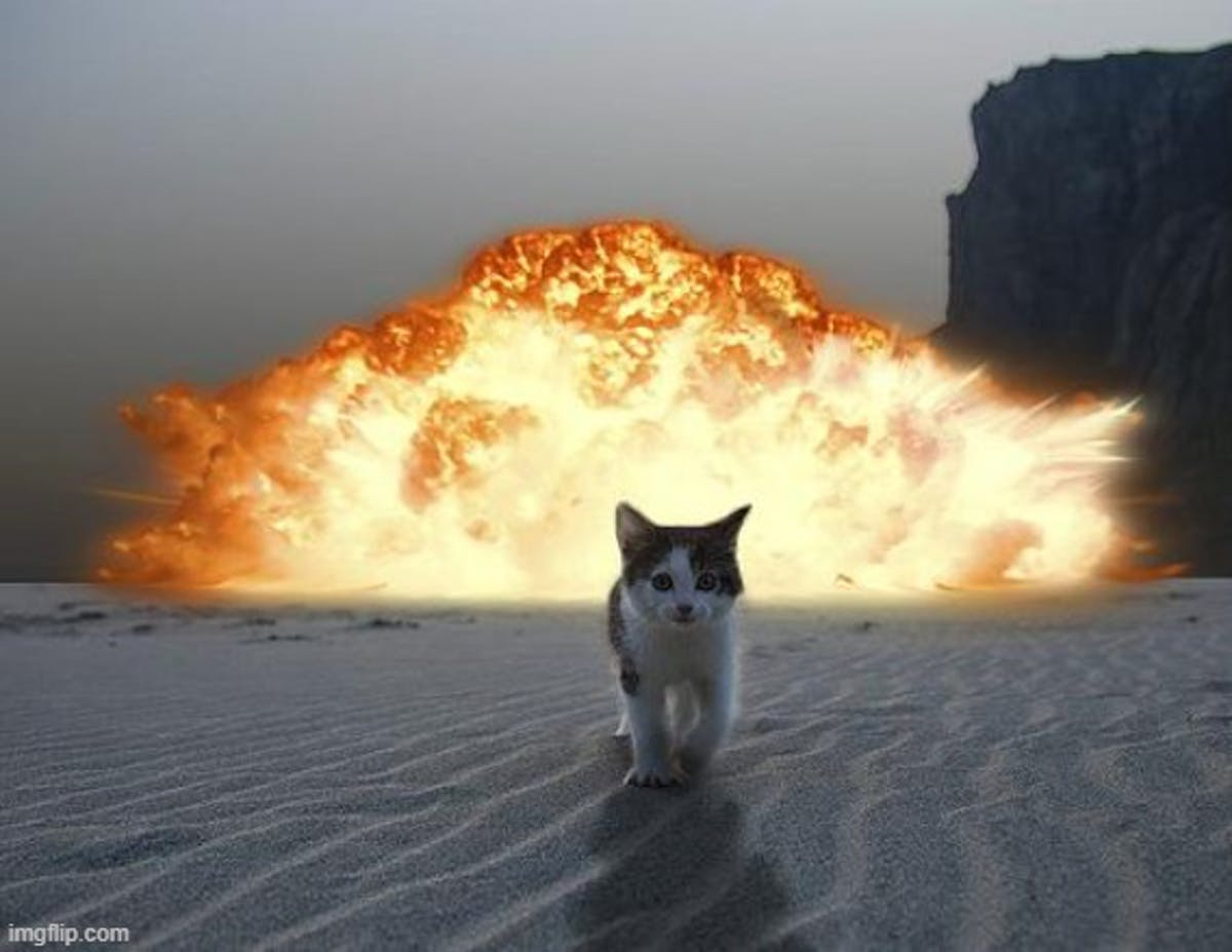 Cat walking away from explosion behind him, toward viewer