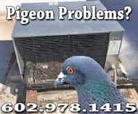 Pigeon Pest Control Phoenix Az