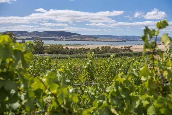 Coal Valley Vineyard